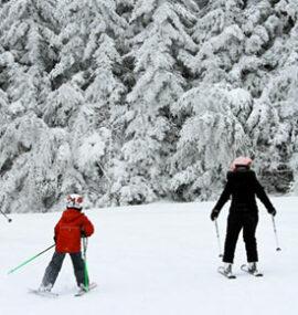 A family skis through beautiful heavy snow.