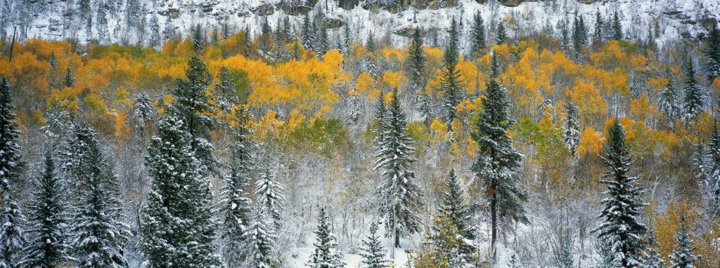 004-Changing-Seasons