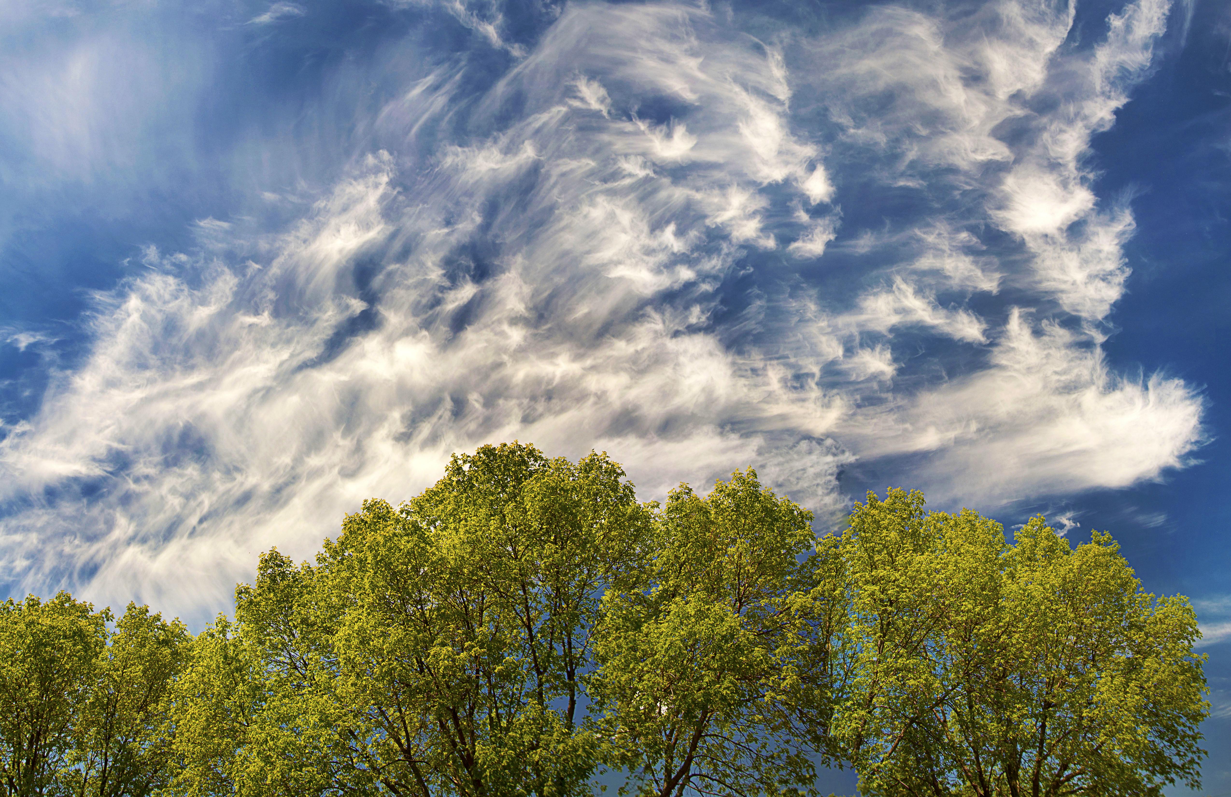 Spirited-Skies
