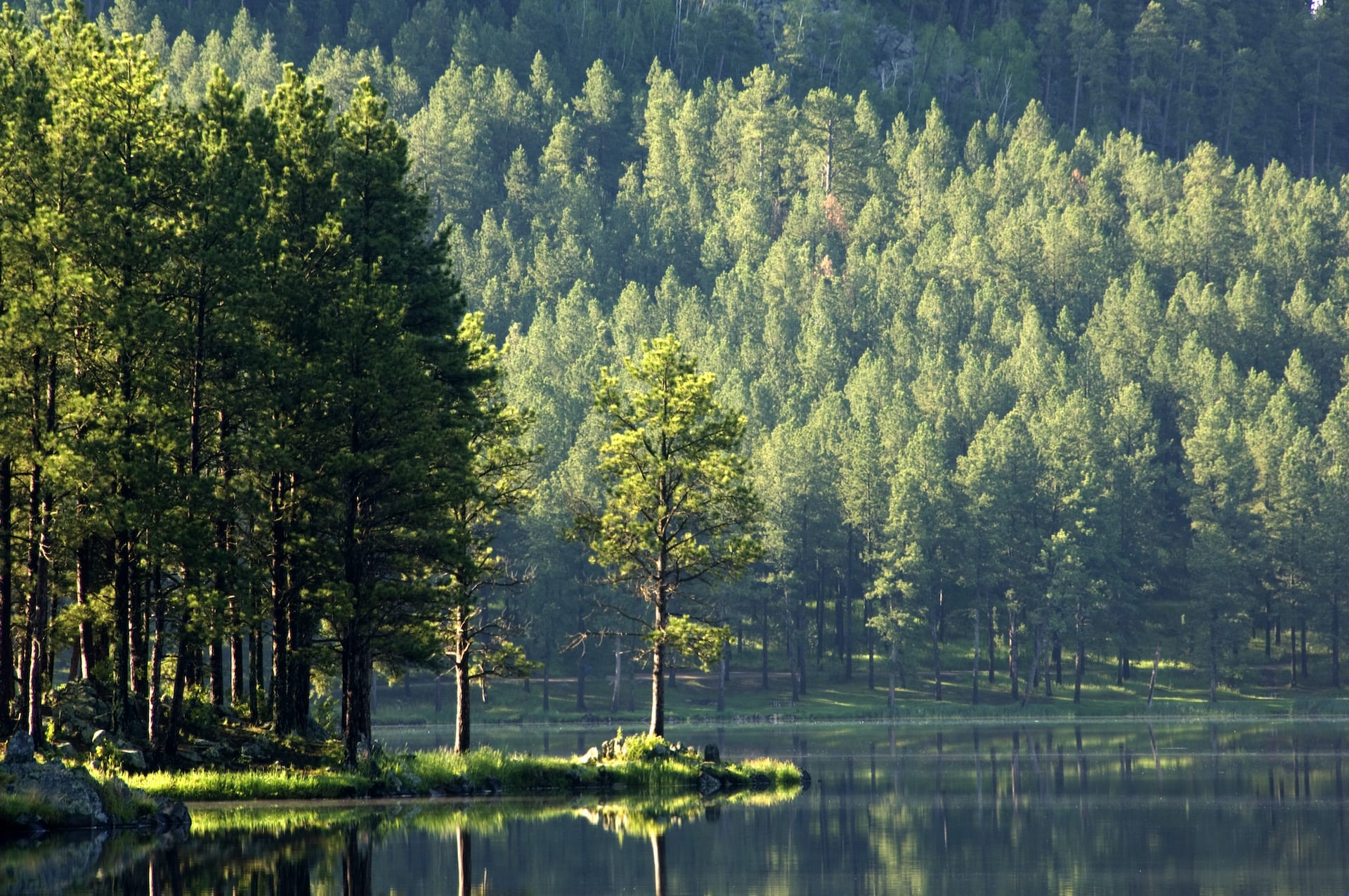 A peacefully calm lake with pine trees on the banks.
