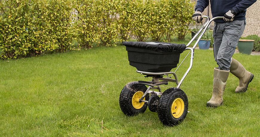 seeding lawn in spring