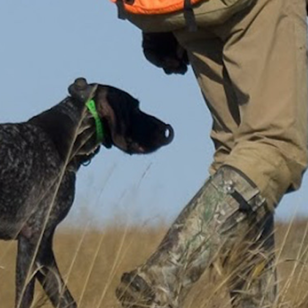 Hunting dog following owner