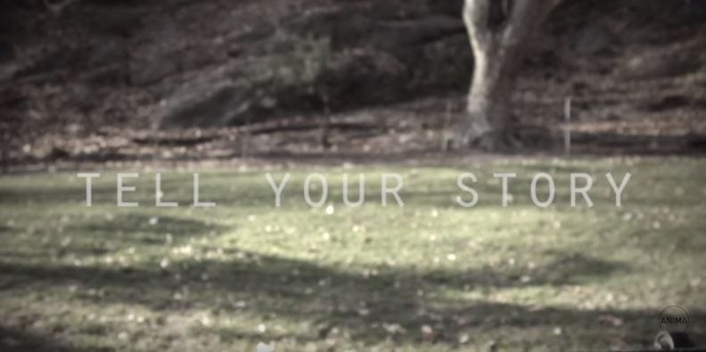 Tell Your Story (Video)