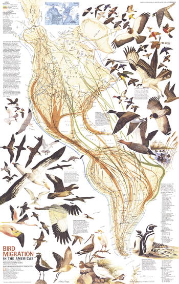 Bird Migration in the Americas  -  Published 1979
