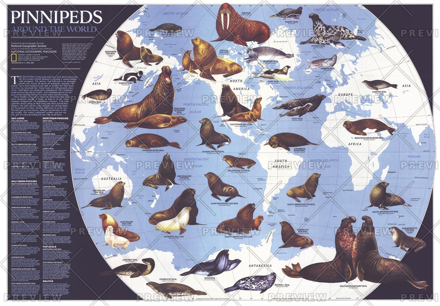 Pinnipeds Around the World  -  Published 1987