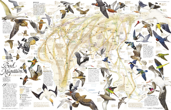 Bird Migration Eastern Hemisphere  -  Published 2004