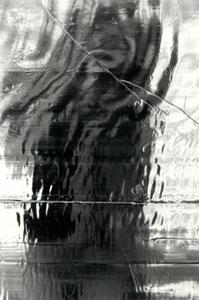 sarahjane | reflect | my backyard