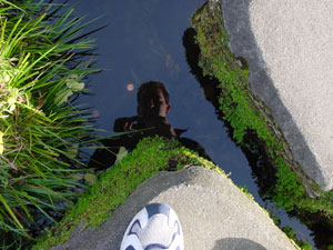 Steve | Reflection in a pool | taken in the Chinese Tea Garden in Golden Gate Park (SF)