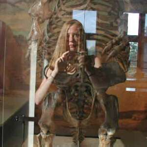 Katy Lindemann | evolution
