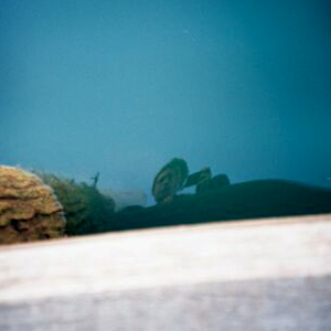 duncan creamer | sydney-watsonsbay-me-water.jpg | Watson's Bay, Australia