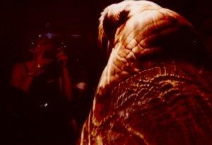 alex | In Space, Walrus Can't Hear You Scream | Sea World San Diego, CA, USA