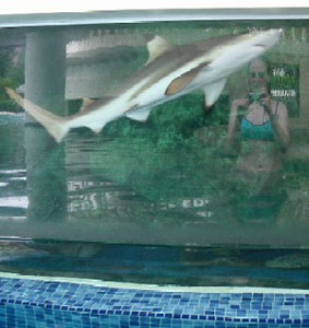 kristen | Swimming with Sharks | Singapore