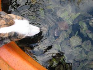 Barbara Agnew | Thirsty dog | South Queensferry, Scotland