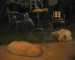 Luar | 3 Little Sleeping Animals | Hong Kong
