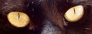 galleries | Noah Grey | animal magnetism