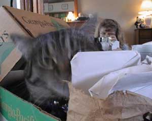 cheryl | Cat in the Box | Bay Area, California, USA