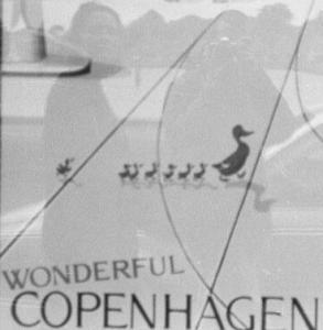 db | ducks in copenhagen | Copenhagen, Denmark