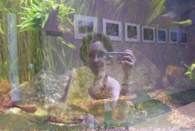 Emily  | fishes | Brookside Gardens, Wheaton, Maryland