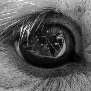 Noah Grey | Self Portrait In Rabbit Eye