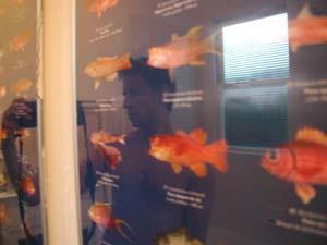 Denis Krylov | Poissons de profondeur de polynesie francaise | San Francisco