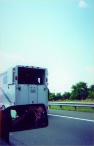 jeremy   Horses on the 401   Highway 401
