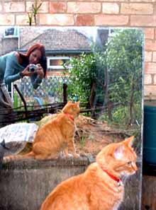 Lisa de Araujo | two times cat | Cambridge, UK
