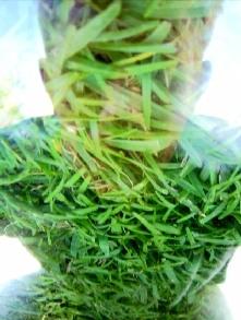 larnaud stibling | grass man | Mohammedia, Morocco - Maroc