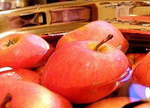 maria gozdzik | Harvest time | My kitchen , Ontario