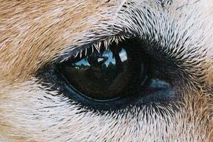 amanda | dogseyeview | philadelphia, pa