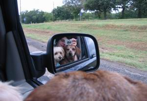 Elaine Mesker-Garcia | Roadtripping with the dogs | Interstate 45 between Houston & Dallas