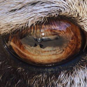 Noah Grey | Self-Portrait In Ram's Eye