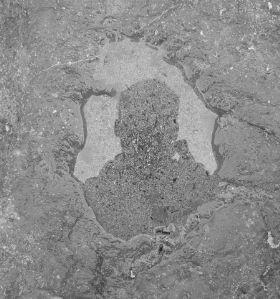 David   rock puddle   Washington State, USA