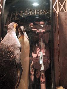 colin | paris and a penguin | paris, france