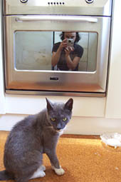 Sarah | Cat & Stove