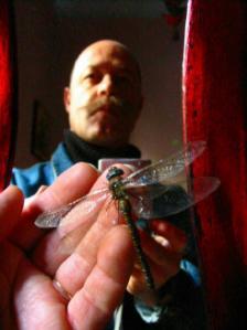 hugo solo | dragonfly,libélula, matapiojo | barcelona. spain