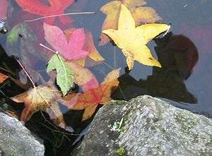 David | leaves left | Washington State, US