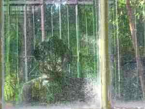 Ruth Zilkha | At the Jardins des Plantes in Paris | Paris, France