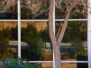 Francisco Morata Vila | Modern nature | Barcelona (Spain)