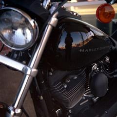 amanda | pure American horsepower | Memphis, TN