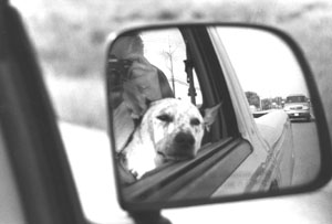 Jaime Laurita | chip and me on the road | somewhere in Michigan