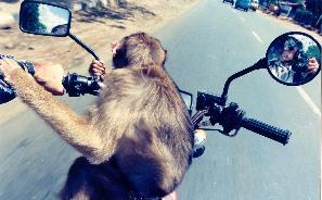 Byron Black | Two Monkeys Biking Down Bogor Raya | Cipayung, West Java
