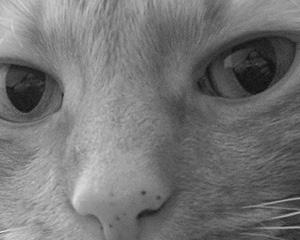 Jacquie Childers | Charlie's Eyes | NJ, USA