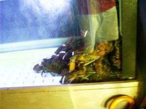 greg p | lobster tank