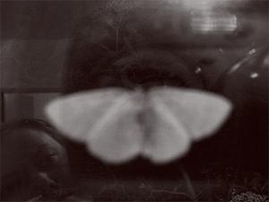 Paula Gabrielle Titterton | moth-elder-me | Audley, Staffordshire, England.