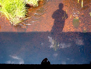Allan O'Mara | Shadow and Reflection | Bird's Creek, Ontario