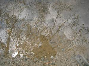 nic ruffy | watery depths | blueridge parkway, north carolina, usa