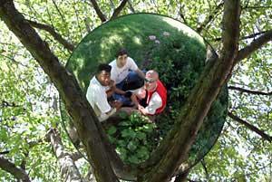 Chad Greene | in a tree 1 | Omaha, Ne