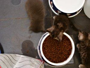 Francisco Morata Vila | More cats | Blanes, Girona