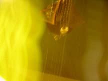 April B | streaky celing | Missoula, MT