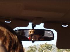 Dustin Matchett   The back seat